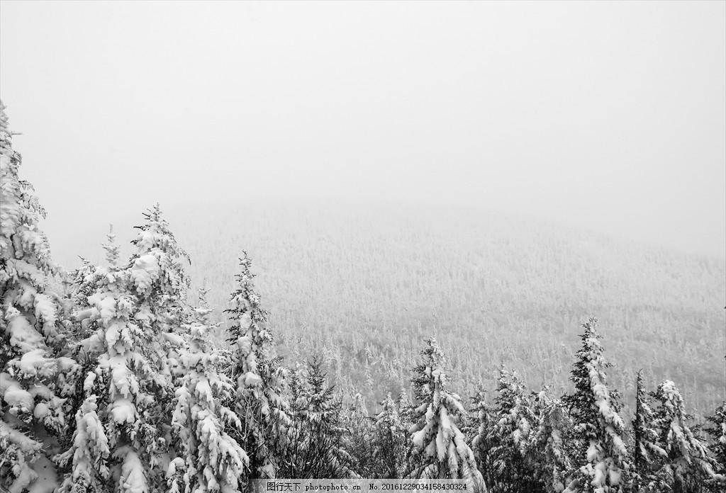 下雪天的树林 下雪天的 树林 俯视 松树 雪茫茫 大雾 风景 摄影 自然