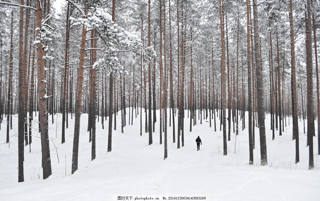 雪地 白桦树 大雪 树林 冬天 寒冷 白雪皑皑 雾凇 厚厚的雪 漂亮雪景