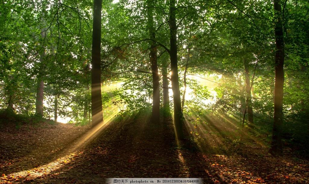 树林 森林 阳光 草地 早晨 树叶 公园 秋季 秋景 秋天 透过树缝的光