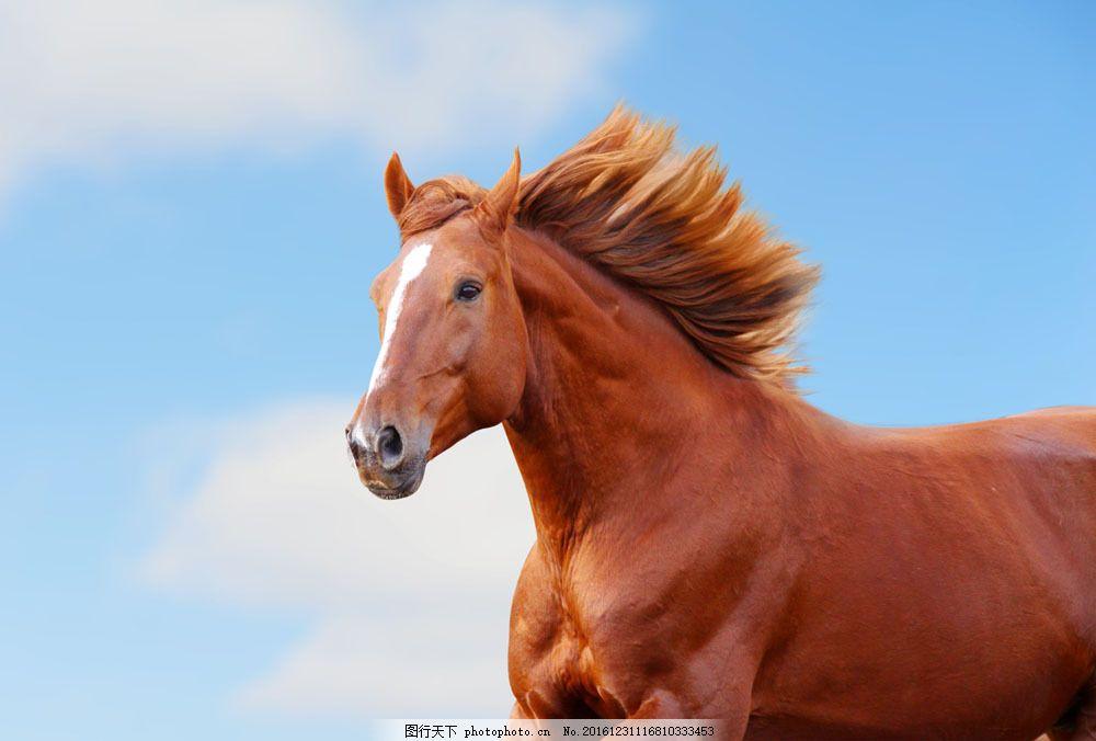 奔跑的骏马 奔跑的骏马图片素材 动物 野生动物 动物世界 陆地动物