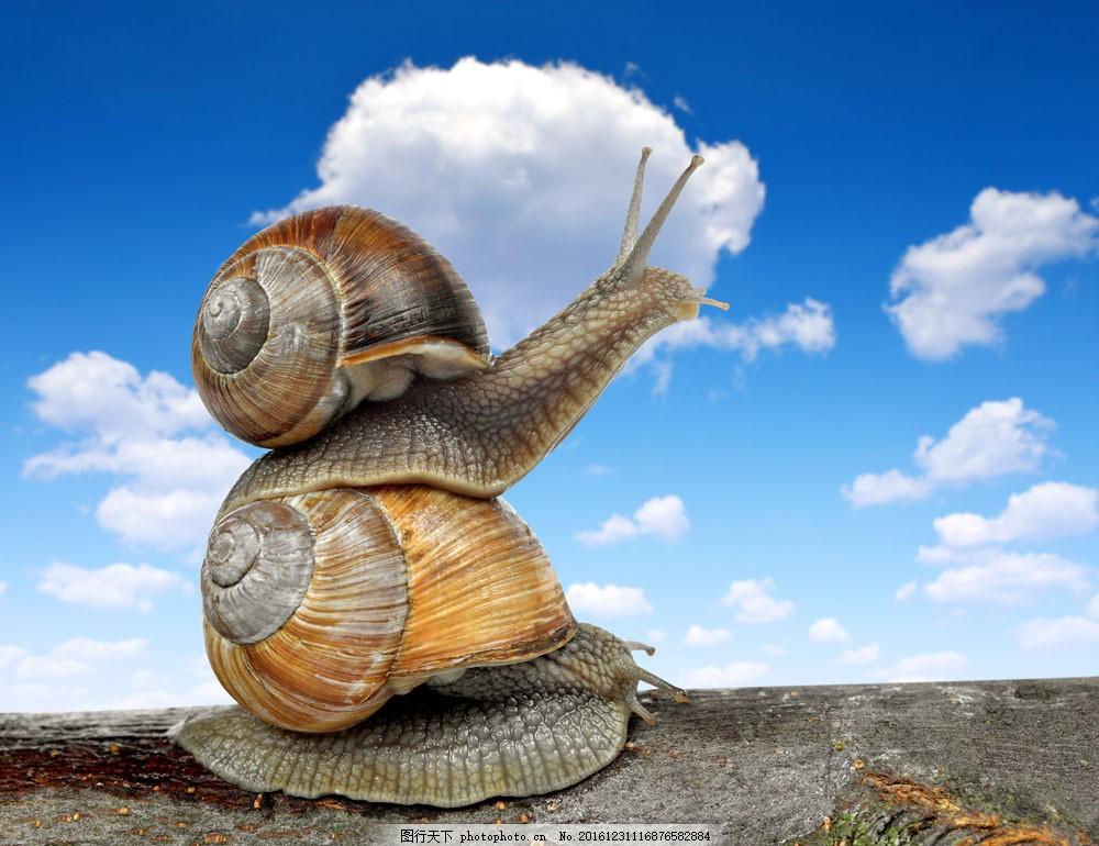 重叠在一起的蜗牛 重叠在一起的蜗牛图片素材 陆地动物 爬行动物