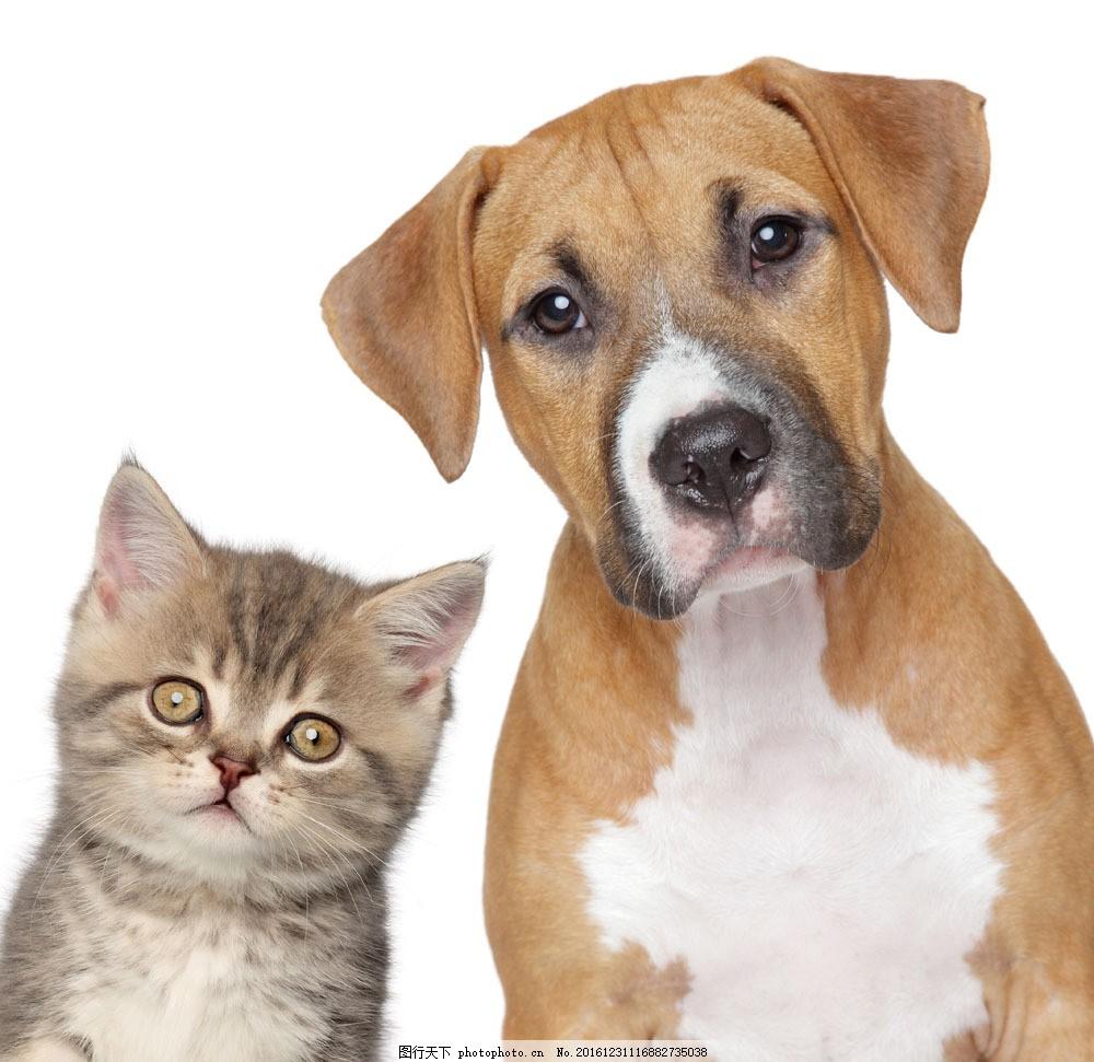 呆萌的小猫与狗 呆萌的小猫与狗图片素材 小狗 动物 宠物 陆地动物